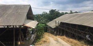 Andi Arief Wanti-wanti Ridwan Kamil Soal Jejaring Peternak China Di Kawasan Gunung Padang